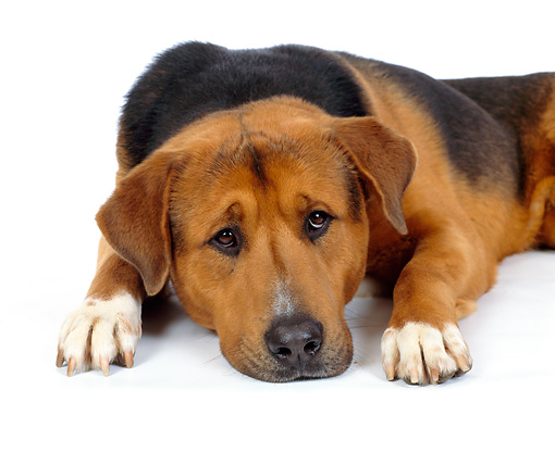 Image result for dog head down
