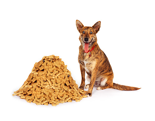 DOG 07 RK0571 01 © Kimball Stock Mixed Breed Sitting Next To A Pile Of Dog Treats On White Seamless