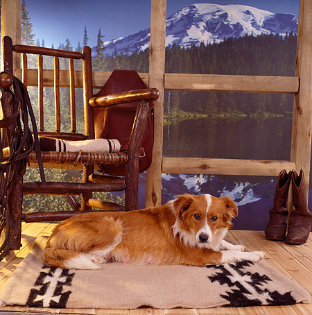 DOG 07 RS0008 01 © Kimball Stock Mixed Breed Dog Laying On Porch By Rocking Chair Mountains Lake Trees