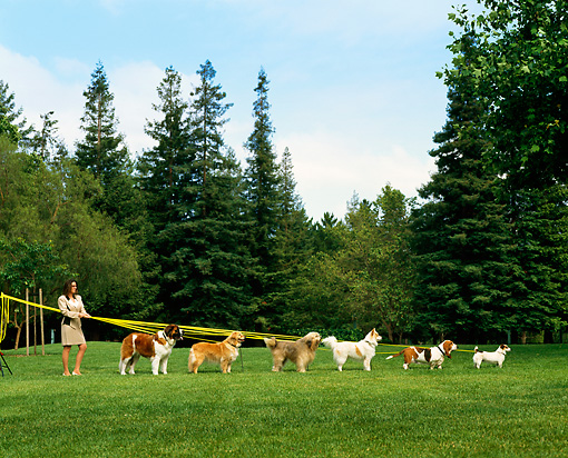 DOG 17 RK0008 14 © Kimball Stock Woman Holding Leashes Of Six Dogs On Grass By Trees
