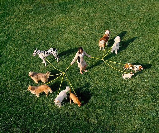 DOG 17 RK0012 23 © Kimball Stock Overhead Shot Of Group Of Dogs On Leash On Grass