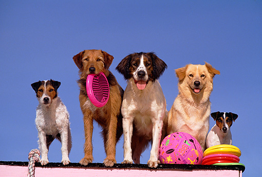 DOG 17 RK0041 32 © Kimball Stock Group of Dogs Sitting On Ledge With Toys Blue Sky