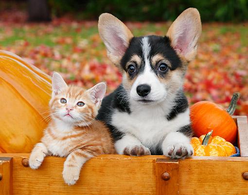 Pumpkin Animal Stock Photos Kimballstock