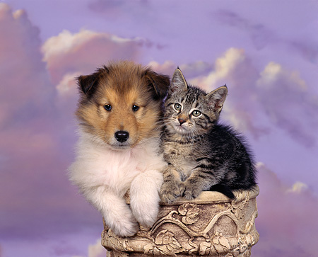 DOK 01 RK0025 01 © Kimball Stock Collie And Kitten Sitting On Pedestal Purple Sky With Clouds