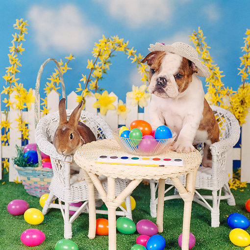 DOK 02 RS0004 03 © Kimball Stock English Bulldog And Rabbit At Table With Easter Eggs