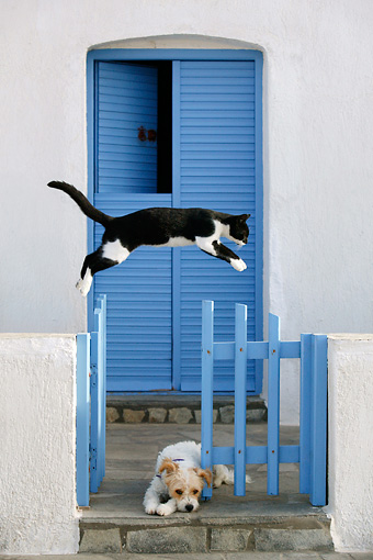 DOK 03 KH0001 01 © Kimball Stock Black And White Greek Island Cat Jumping Over Resting Mixed-Breed Dog On Porch