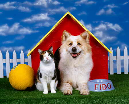 DOK 03 RK0019 04 © Kimball Stock Mixed Breed And Calico Cat Sitting Together By Dog House Blue Sky