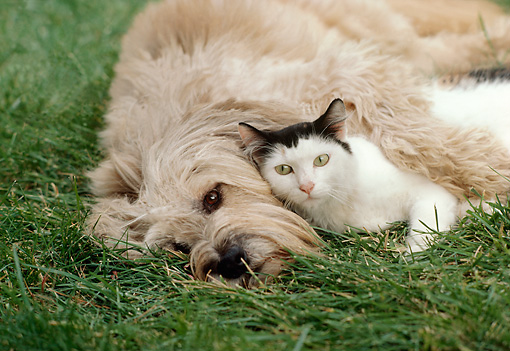 DOK 03 RK0106 01 © Kimball Stock Mixed Breed Dog And Black And White Cat Laying On Grass