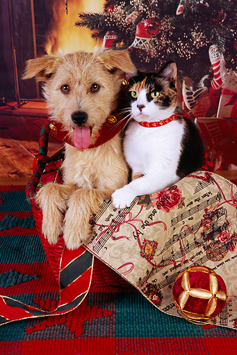 DOK 03 RK0213 02 © Kimball Stock Mixed Breed Terrier And Calico Cat Sitting In Basket By Christmas Decorations