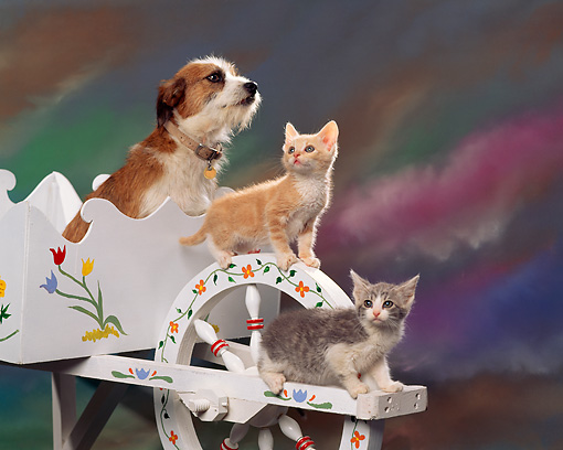 DOK 04 RK0104 03 © Kimball Stock Terrier Mix And Kittens On Flowered Wheelbarrel Mottled Background