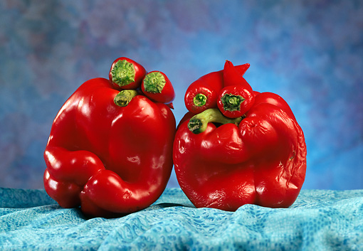 GCD 01 RC0002 01 © Kimball Stock Bell Pepper People On Blue Cloth