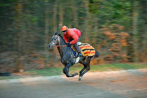 HOR 01 JE0003 01 © Kimball Stock Jockey Racing Thoroughbred Horse In Wooded Area
