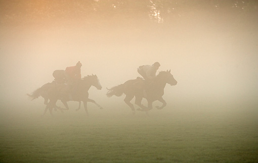HOR 01 JE0004 01 © Kimball Stock English Thoroughbreds Racing On Field In Fog