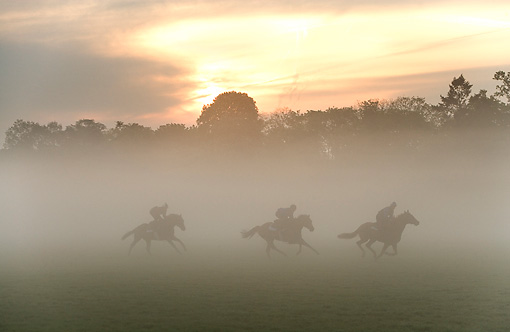 HOR 01 JE0005 01 © Kimball Stock English Thoroughbreds Racing On Field In Fog