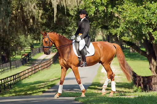 HOR 01 MB0243 01 © Kimball Stock Woman Riding Dressage On Warmblood Walking On Grass
