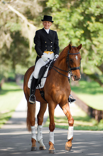 HOR 01 MB0244 01 © Kimball Stock Woman Riding Dressage On Warmblood Walking On Road