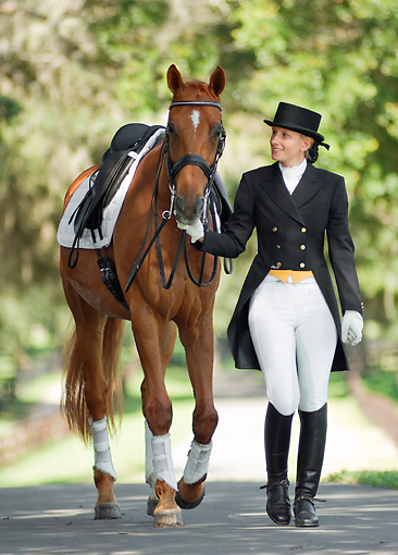 HOR 01 MB0245 01 © Kimball Stock Woman In Dressage Clothes Leading Warmblood On Road