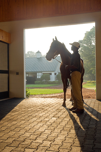 HOR 01 MB0247 01 © Kimball Stock Man Holding Thoroughbred Stallion In Barn