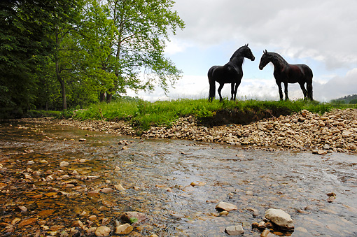 HOR 01 MB0399 01 © Kimball Stock Two Friesian Horses Standing By Creek Against Stormy Sky