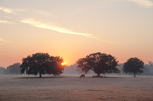 HOR 01 MB0498 01 © Kimball Stock Sun Rising Over Distant Horse On Icy Grass