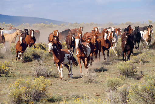 HOR 01 RK0355 03 © Kimball Stock Herd Of Horses