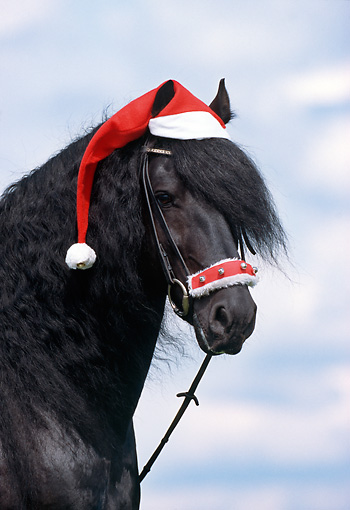 Image result for christmas horses
