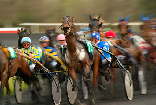 HOR 01 KH0029 01 © Kimball Stock Horses Running In Harness Race