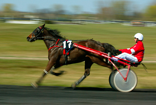 HOR 01 KH0030 01 © Kimball Stock Horse And Driver Trotting In Harness Race