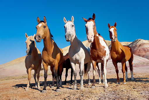 HOR 01 KH0048 01 © Kimball Stock Herd Of Horses Standing By Hills