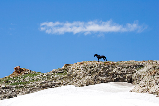 HOR 01 KH0106 01 © Kimball Stock Black Mustang Standing On Rocky Hill With Snow