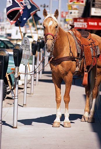 HOR 01 MR0015 01 © Kimball Stock Palomino Horse Tied To Parking Meter Wyoming