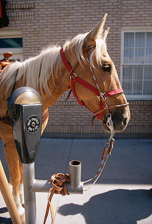 HOR 01 MR0016 01 © Kimball Stock Palomino Horse Tied To Parking Meter Wyoming