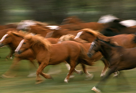 HOR 01 RK0138 05 © Kimball Stock Blurry Profile Of A Herd Of Horses Galloping On Grass