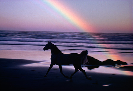 HOR 01 RK0878 17 © Kimball Stock Silhouette Of Arabian Horse Trotting On Beach With Rainbow
