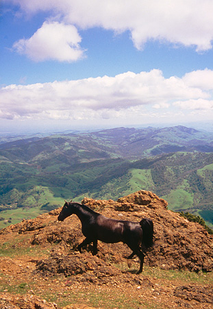 HOR 01 RK0960 04 © Kimball Stock Black Arabian Horse Standing On Mountain Blue Sky Clouds