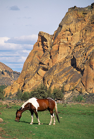 HOR 01 RK1054 04 © Kimball Stock Pinto Horse Grazing On Grass Rock Mountain Background