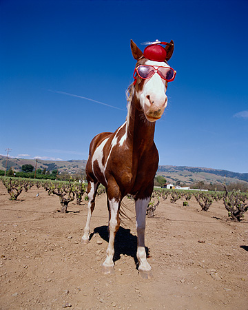 HOR 01 RK1272 16 © Kimball Stock Humorous Wide Angle Head Shot Of Horse Wearing Hat And Glasses Blue Sky