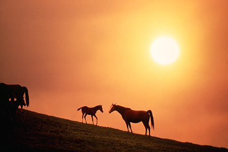 HOR 01 RK1426 03 © Kimball Stock Silhouette Profile Of Arabian Mare And Foal On Hill With Special Effects