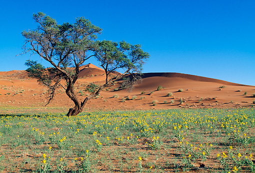 LAN 01 MH0014 01 © Kimball Stock Grass, Flowers And Sand Against Blue Sky Namibia