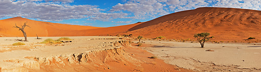 LAN 01 MH0044 01 © Kimball Stock Dead Acacia Trees And Erosion In Namib Desert