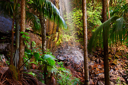 LAN 01 MH0098 01 © Kimball Stock Waterfall And Coco De Mer Palms In Vallee De Mai Palm Forest In Praslin National Park, Seychelles