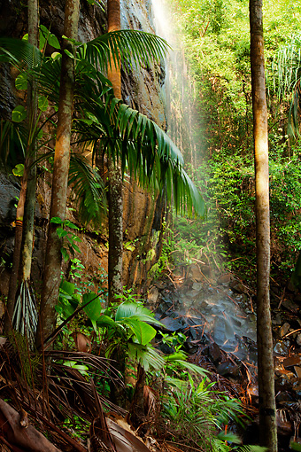 LAN 01 MH0099 01 © Kimball Stock Waterfall And Coco De Mer Palms In Vallee De Mai Palm Forest In Praslin National Park, Seychelles