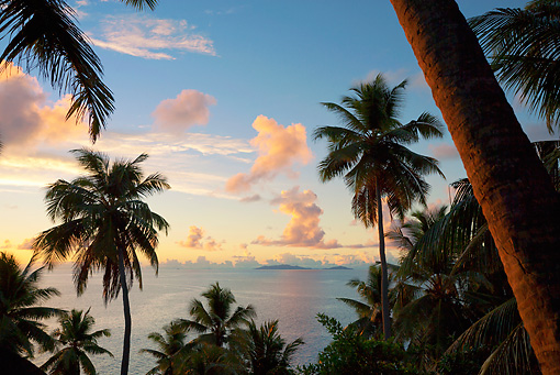LAN 01 MH0100 01 © Kimball Stock View Of Beach Through Coconut Palms At Sunset On Fregate Island, Seychelles