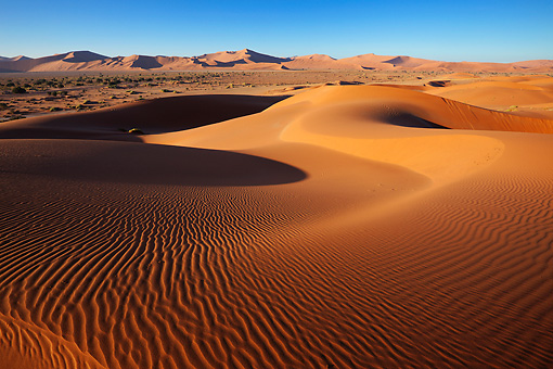 LAN 01 MH0120 01 © Kimball Stock Intricate Dune Pattern Lit Up By Morning Sun In Namib Desert, Namibia