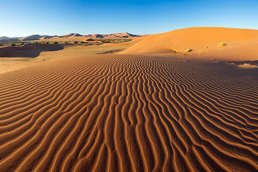 LAN 01 MH0122 01 © Kimball Stock Intricate Dune Pattern Lit Up By Morning Sun In Namib Desert, Namibia