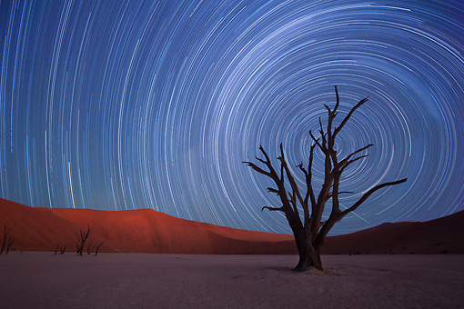 LAN 01 MH0126 01 © Kimball Stock Dead Acacia Trees With Milky Way Motion Blur In Background In Namib Desert, Namibia