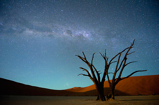 LAN 01 MH0127 01 © Kimball Stock Dead Acacia Trees With Milky Way In Background At Night In Namib Desert, Namibia
