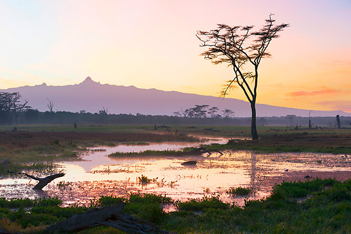 LAN 01 MH0146 01 © Kimball Stock Marsh With Fever Trees At Sunrise With Mount Kenya In Background At Ol Pejeta Conservancy, Kenya