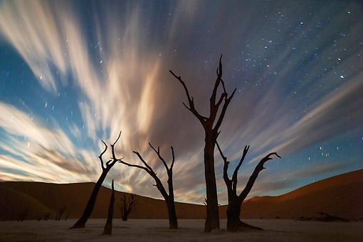 LAN 01 MH0156 01 © Kimball Stock Dead Acacia Trees In Dead Vlei Salt And Clay Pan In Sossusvlei, Namibia