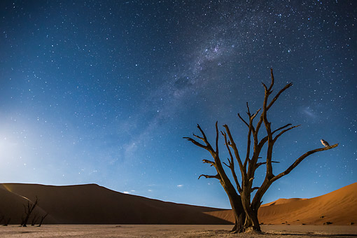 LAN 01 MH0157 01 © Kimball Stock Milky Way Over Dead Acacia And Barn Owl In Dead Vlei Salt And Clay Pan, Sossusvlei, Namibia